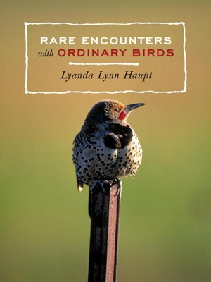 Rare Encounters with Ordinary Birds